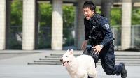 【アクション映画 おすすめ】DOG×POLICE ドッグポリス 純白の絆