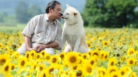 【アニメ 実写】星守る犬